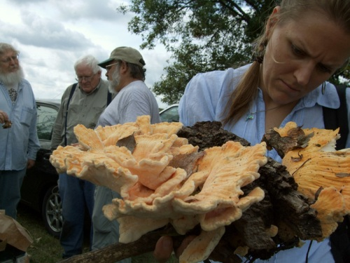 A mushroom huntress in the society examines her kill: chicken of the woods.