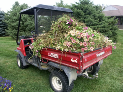 My latest favorite vehicle, the mule. Here filled with moldy petunias.