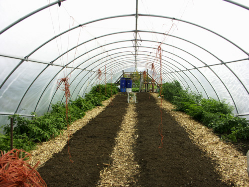 One of City Farm's larger hoop houses. The littler ones aren't more than two feet high.
